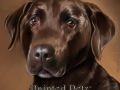 paintedpetz_chocolate_lab